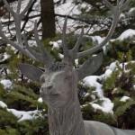 """""""il Cervo simbolico"""" presso il Santuario N. S. di Lourdes a Forno di Coazze"""